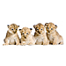 Medium 4 Lion Cubs Graphic